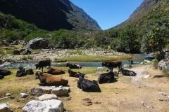 Das Quebrada Santa Cruz durchwandert man in zwei Tagen