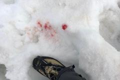 Blutverlust am Gletscher...