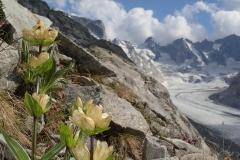 Tüpfelenzian. Nur eine Sorte einer unglaublich reichen Flora vor Ort.